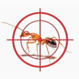 Fire Ant Control Near Me Organic Fire Ant Treatment For Yard Lawns